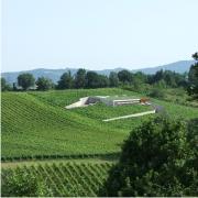 Progetto azienda agricola palazzo